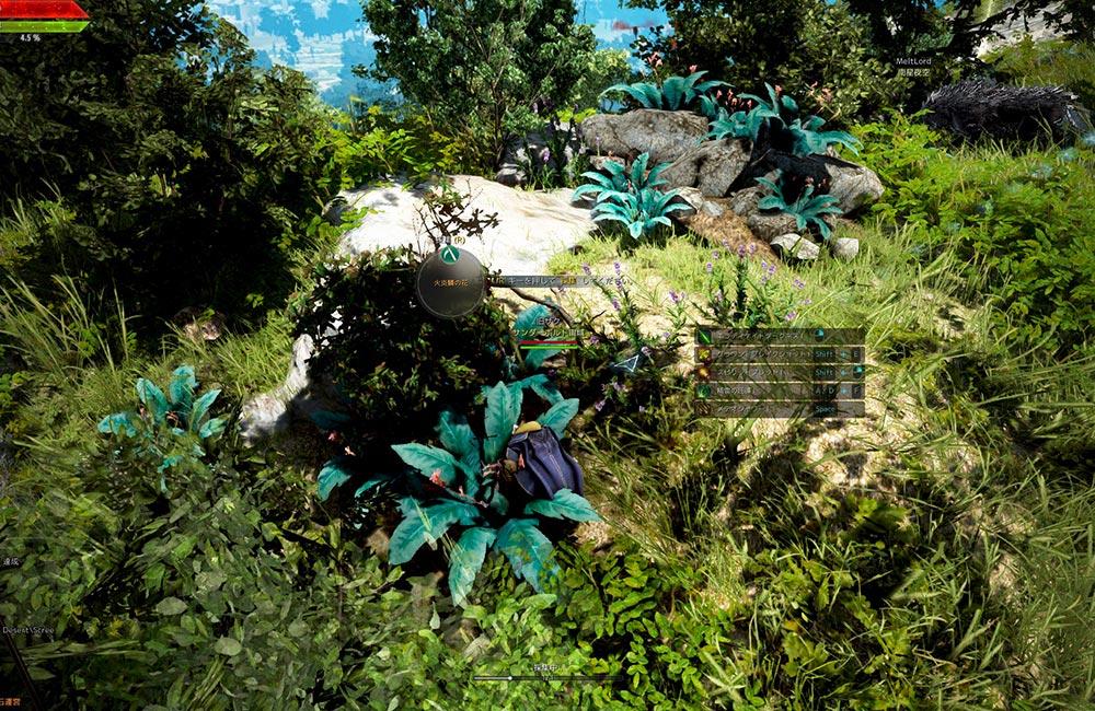 火炎鱗の花がめっちゃ生えている場所【黒い砂漠】